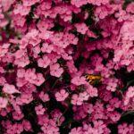 pexels-irina-iriser-1408221