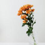 pexels-karolina-grabowska-4041420